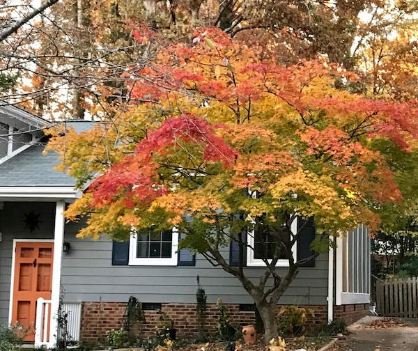 A grey house with a tree in front that has yellow and orange leaves