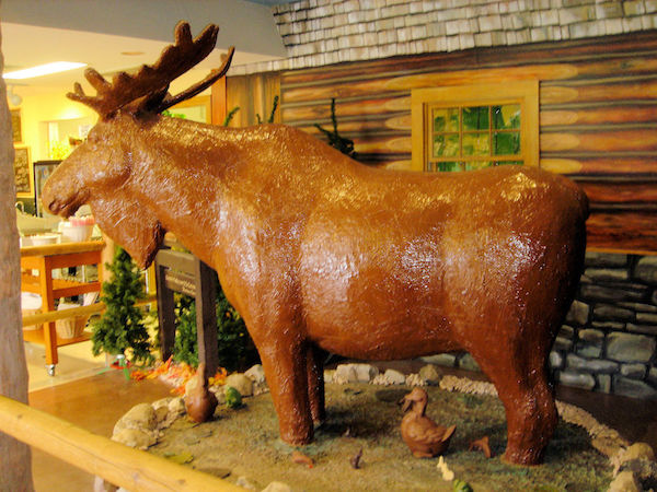 A life sized moose made of chocolate