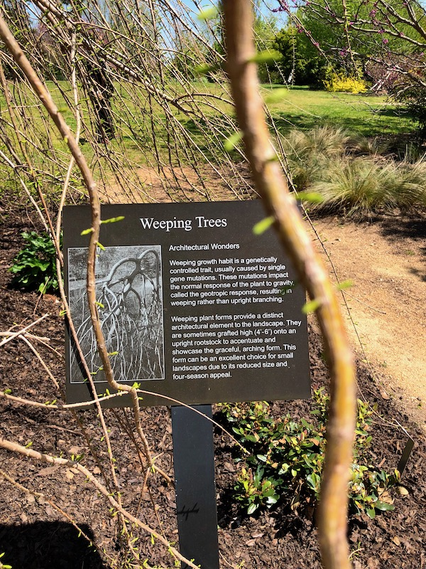 Landscape with a brown sign describing Weeping Trees.