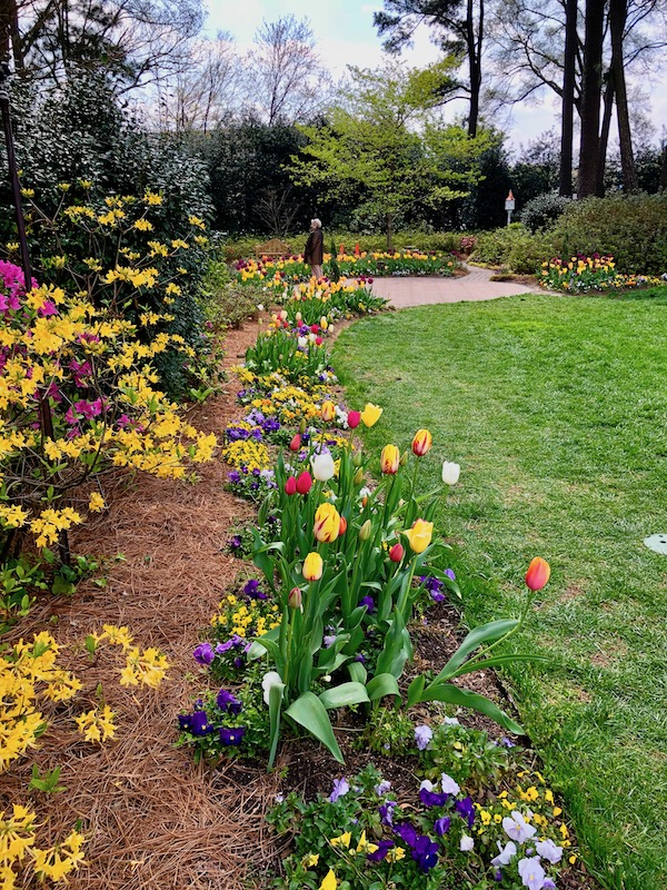 A garden with tulips, pansies and yellow azaleas line a lush lawn.