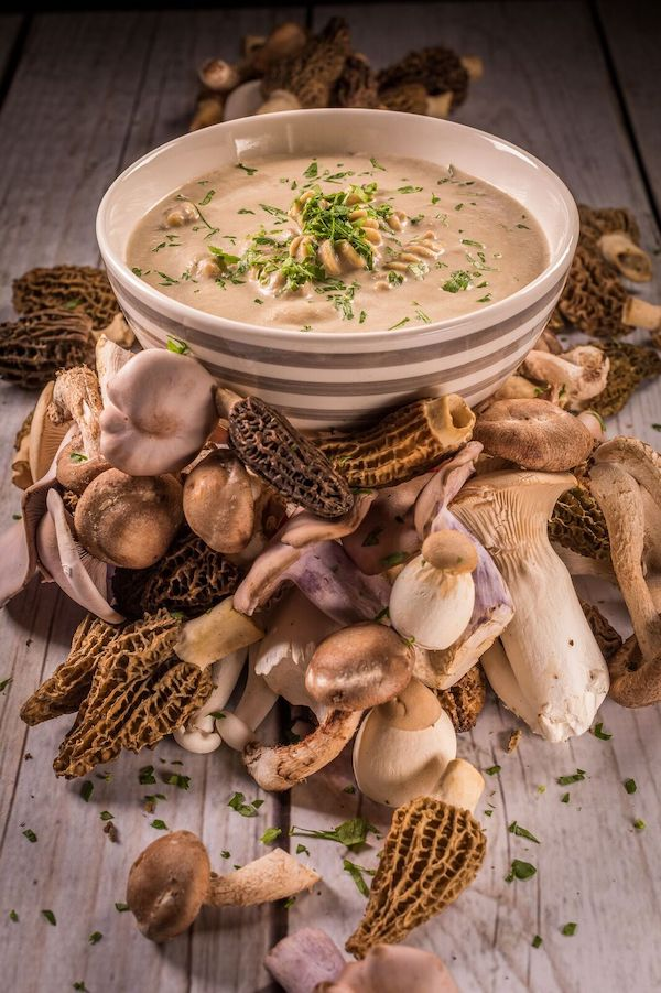 A striped soup bowl filled with cream of mushroom soup and pasta with a large display of cascading mushrooms in front of the bowl.