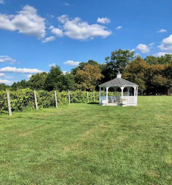 A large lawn with a gazebo in front of the vineyard at Balić Winery in Mays Landing, New Jersey