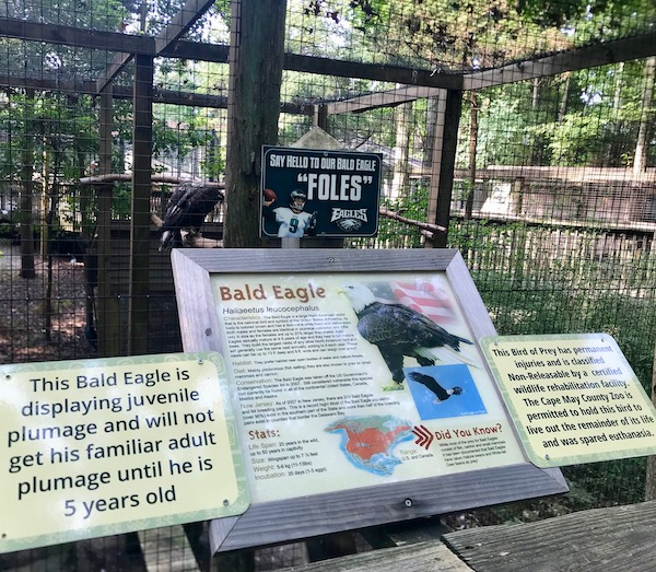 A sign with info about the bald eagle at Cape May County Zoo