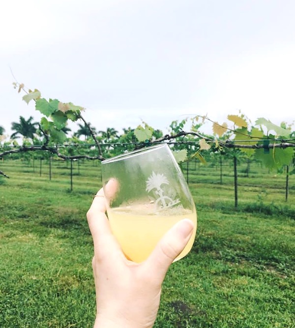 A woman's hand holding a stemless wine glass filled with yellow liquid in foreground. In background it s vineyard at Shower Mom with Love in St. Lucie